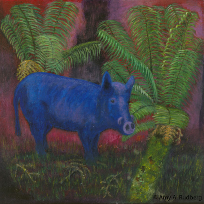 Feral Pig in Rain Forest